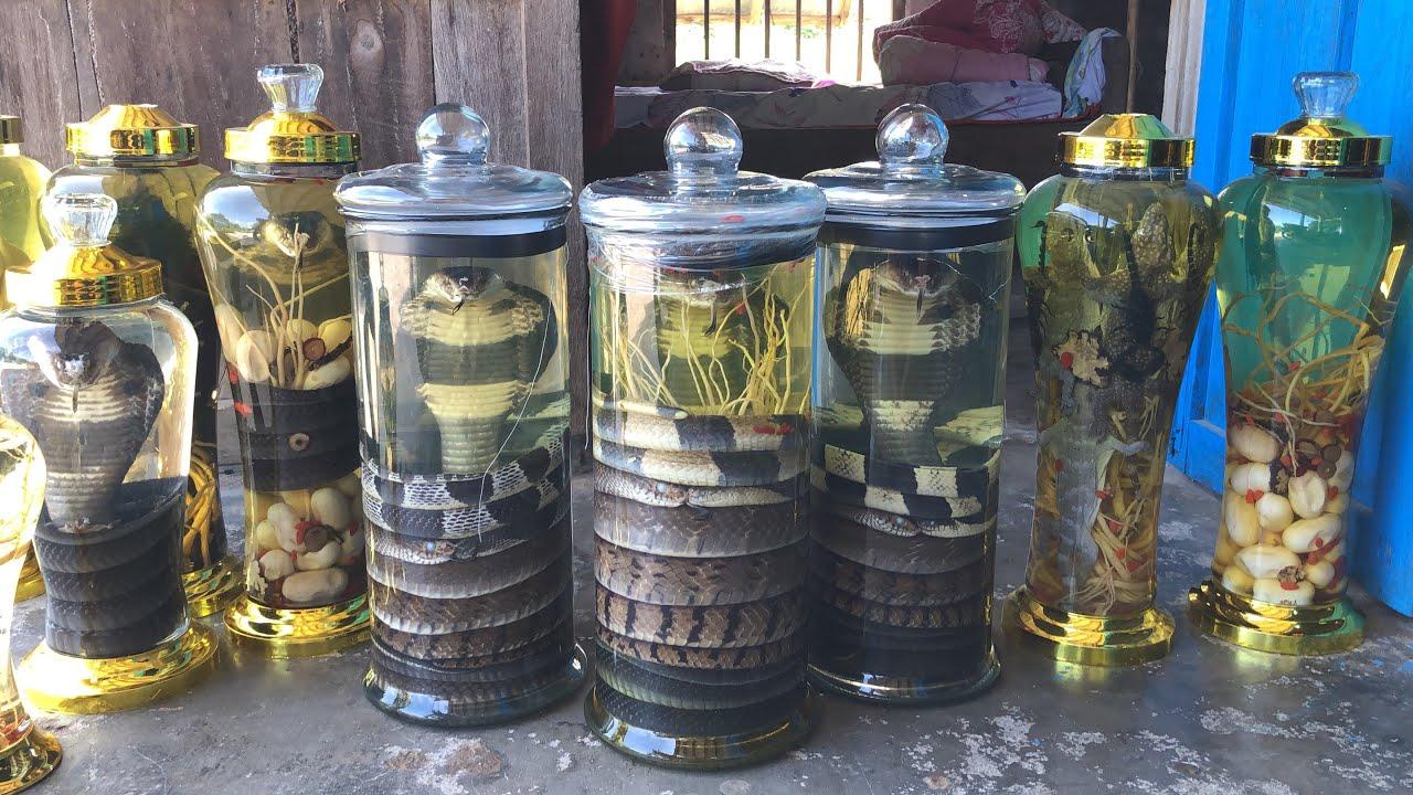Bộ 5 rắn ngâm rượu và cách sử dụng không bị độc