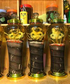 bộ 5 rắn ngâm rượu