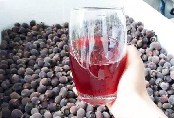 ngâm rượu gì dễ uống
