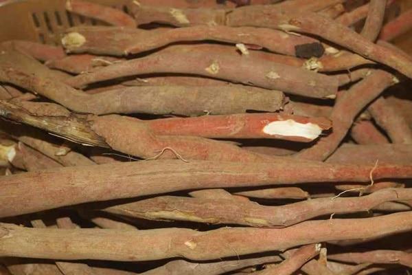 Sâm cau đỏ có thể kết hợp với các vị thuốc từ động vật như bìm bịp, tắc kè