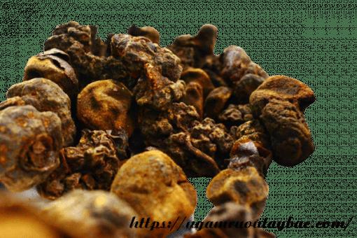 Nấm ngọc cẩu khô