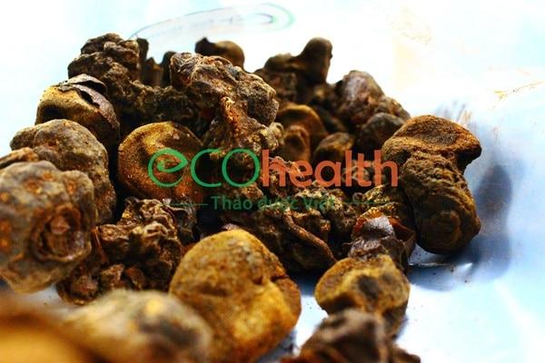 Người ngâm rượu ngọc cẩu nên chọn nấm khô loại xịn